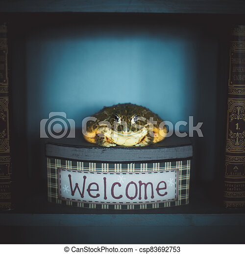 The wise African bullfrog in library on box - csp83692753