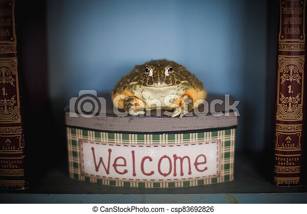 The wise African bullfrog in library on box - csp83692826