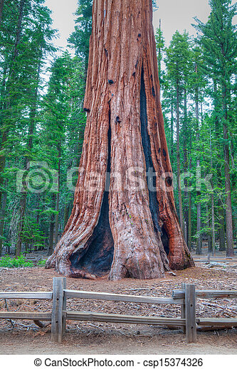 The worlds largest tree - General Sherman - csp15374326