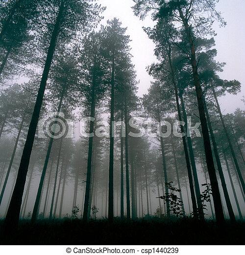 thetford, forêt, arbres - csp1440239