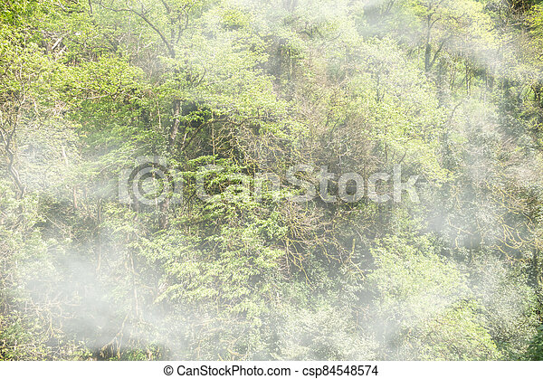 Thick green forest on a hillside in the morning fog. - csp84548574