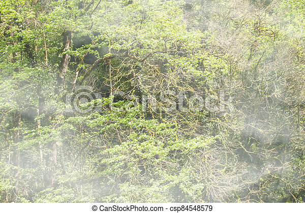 Thick green forest on a hillside in the morning fog. - csp84548579