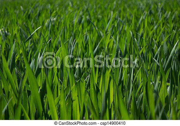 tall green grass field. Thick Green Grass - Csp14900410 Tall Field N