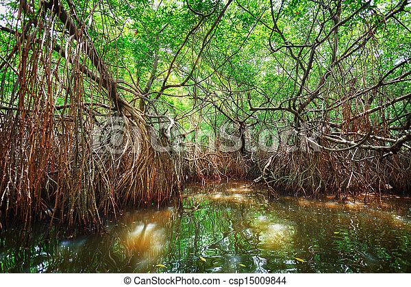 Thickets of mangrove trees in the tidal zone. Sri Lanka - csp15009844