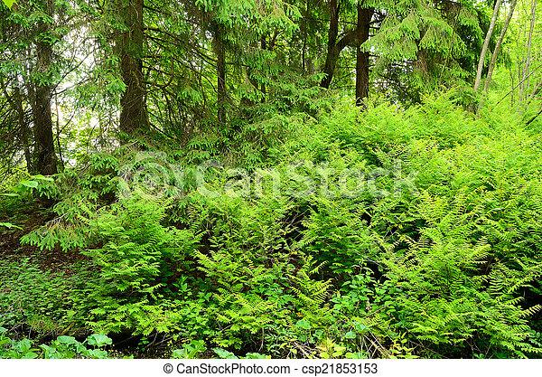 thickets, wälder, farn - csp21853153