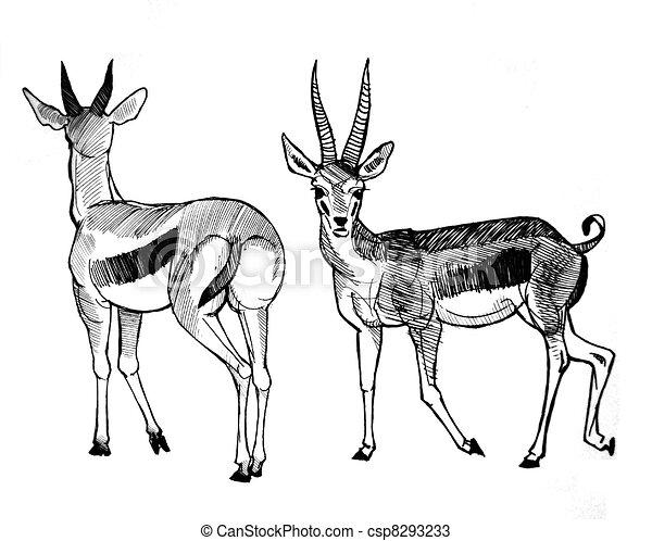 Thompson 39 s gazelle gazelle dos stylo devant thompson 39 s dessin - Gazelle dessin ...