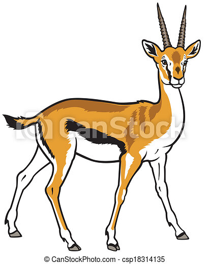 Thomson gazelle thomson gazelle side view picture isolated on white background - Gazelle dessin ...