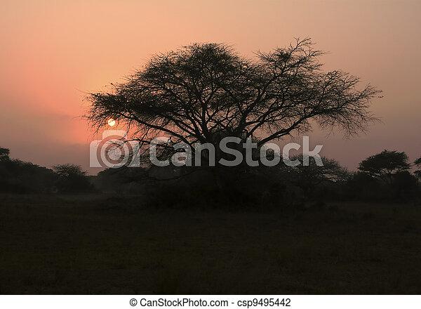 Thorn Tree At Dawn - csp9495442