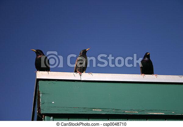 Three Birds - csp0048710