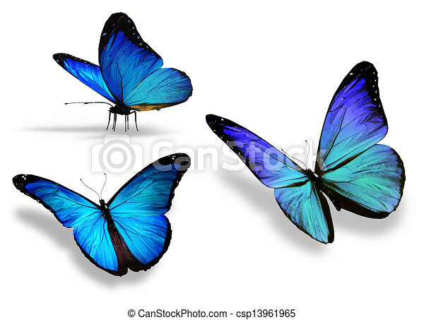 Three Blue Butterfly Isolated On White Background
