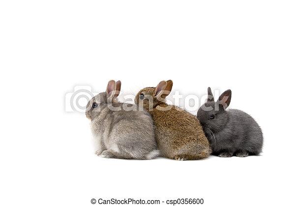 Three Bunnies - csp0356600