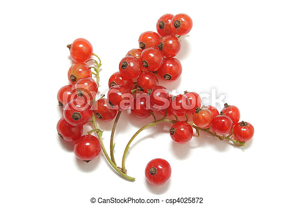 Three clusters of red currant and a single berry isolated on white background - csp4025872