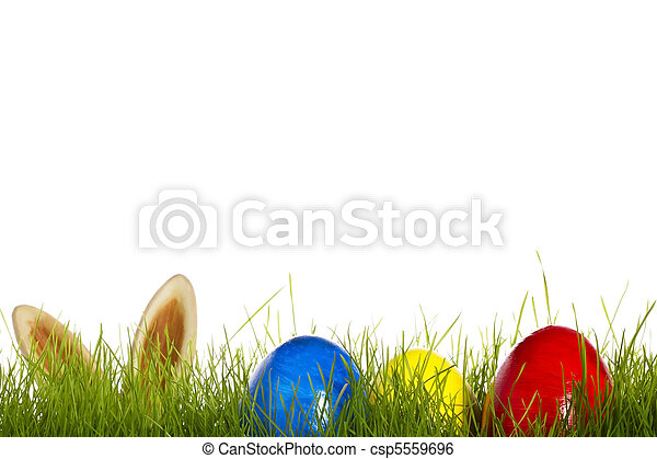 three easter eggs in grass with ears from a easter bunny in background on white - csp5559696