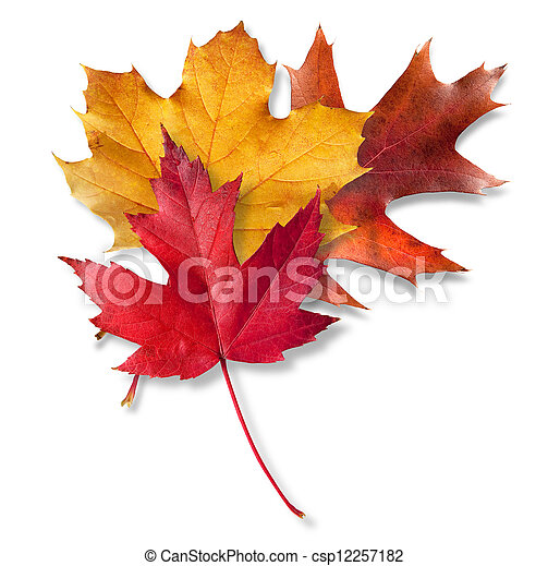 Three Fall leaves - csp12257182