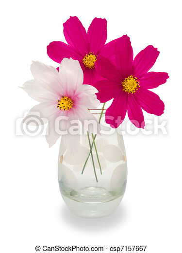 Three Flowers In A Vase Two Purple And One White Flower In A Vase