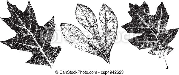 Three Grungy Fall Leaves - csp4942623