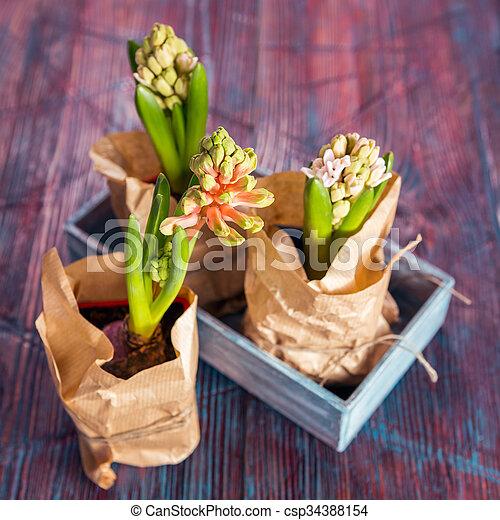 Three hyacinths flowers - csp34388154