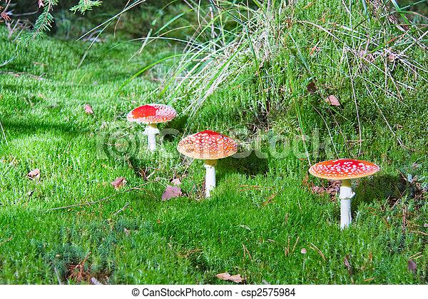 Three mushroom in moss - csp2575984