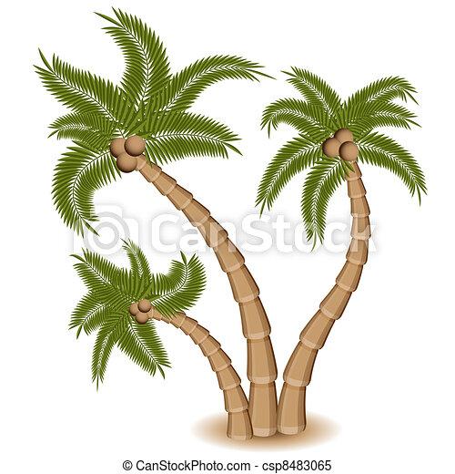 Three Palm Tree Group - csp8483065