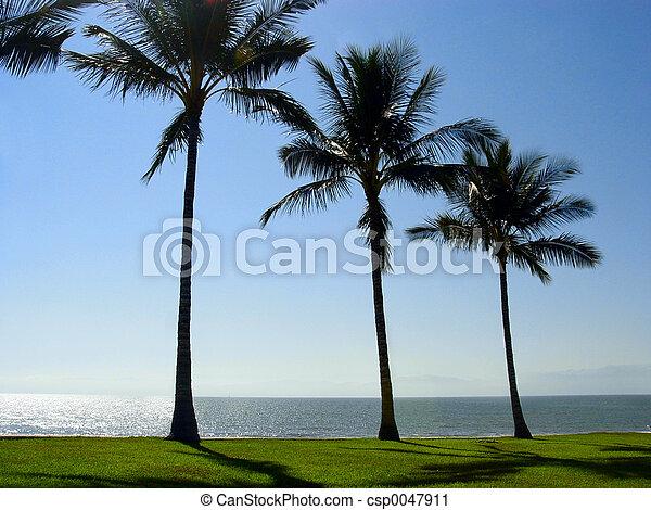 Three palm trees - csp0047911