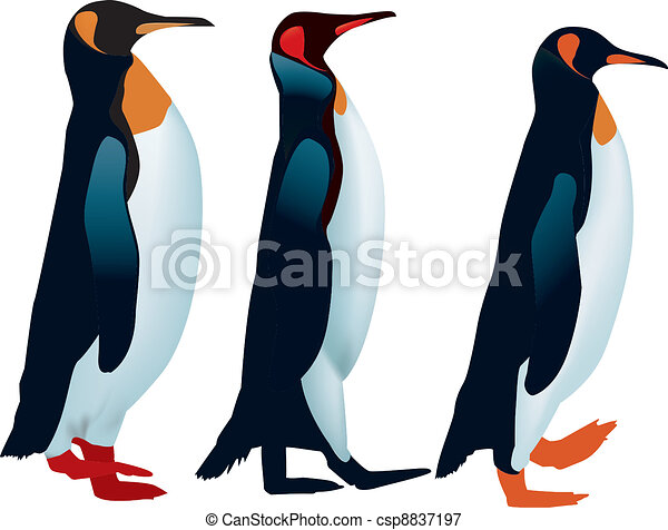 Line Drawing Penguin : Three penguins lined up to walk vectors illustration search