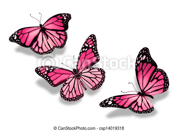 Butterfly Drawings With Color Pink | www.pixshark.com ...