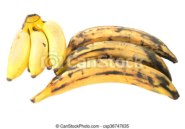 Three plantain bananas versus regular on white background - csp36747635