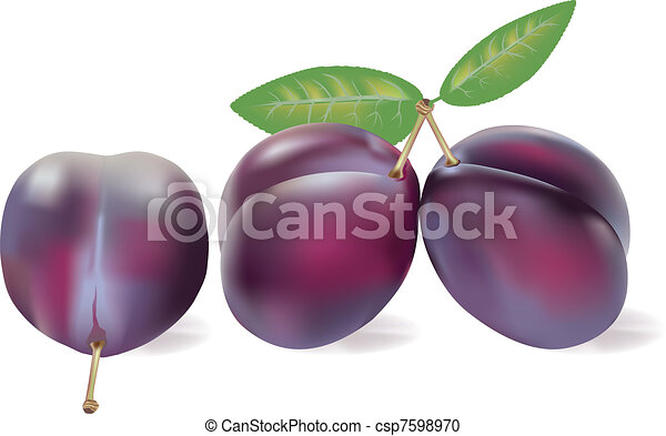 Three Realistic Plums On White