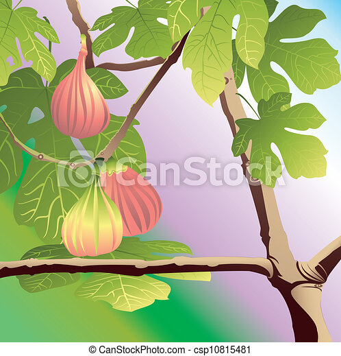 Three Red Figs - csp10815481