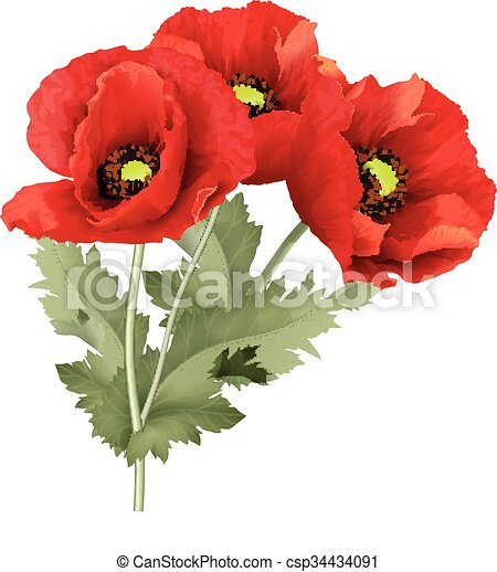 Three red poppy flower with green leaves vector illustration bunch three red poppy flower with green leaves csp34434091 mightylinksfo