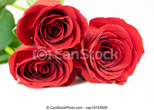 Three red roses on a white background. - csp19743829