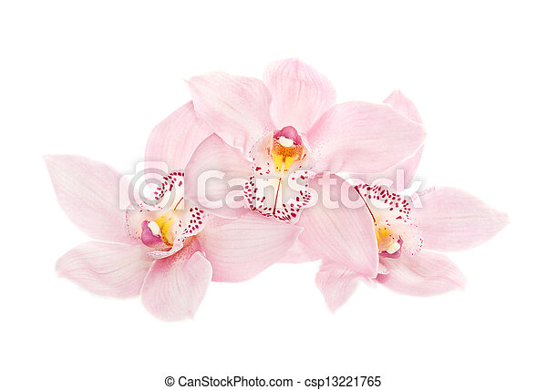 three rosy orchids isolated on white background - csp13221765