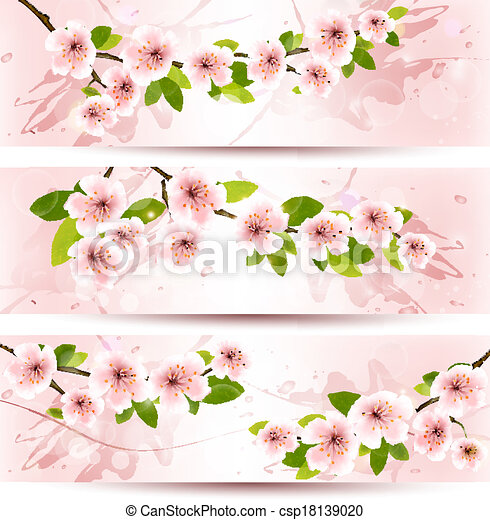 Three spring banners with blossoming sakura brunch with spring flowers. Vector illustration. - csp18139020