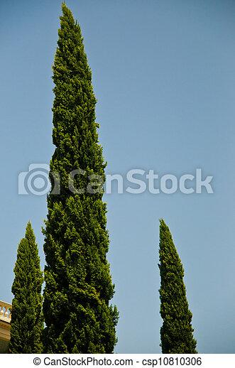 Three Trees - csp10810306