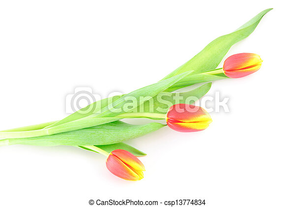 Three tulip flowers isolated on white background - csp13774834