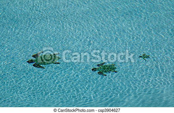 Three turtles in swimming pool