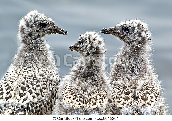 Three Ugly Chicks - csp0012201
