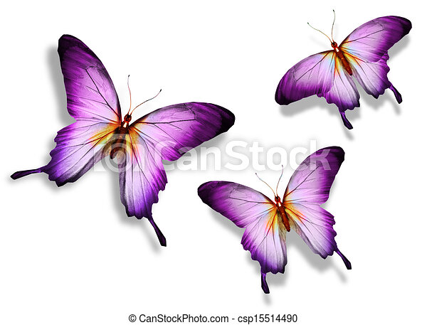 Three violet butterfly - csp15514490