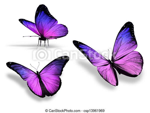 Three violet butterfly, isolated on white background - csp13961969
