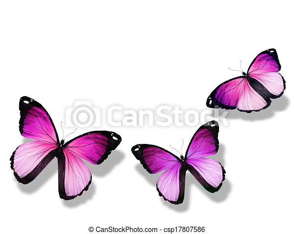 Three violet butterfly, isolated on white background - csp17807586