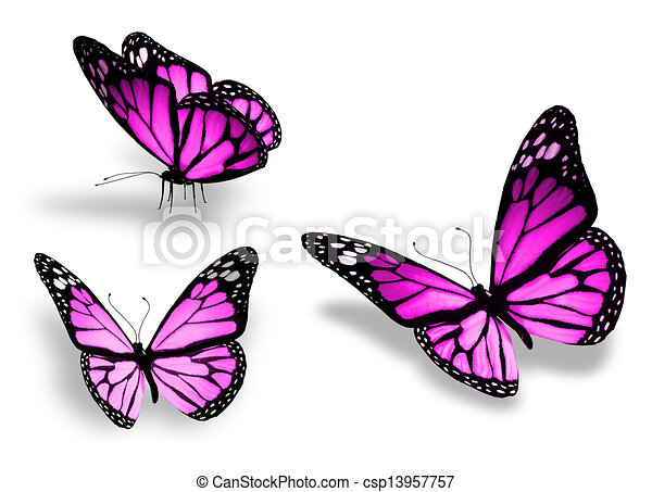 Three violet butterfly, isolated on white background - csp13957757