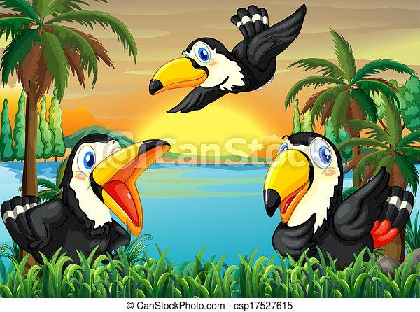 Three wild birds near the river - csp17527615