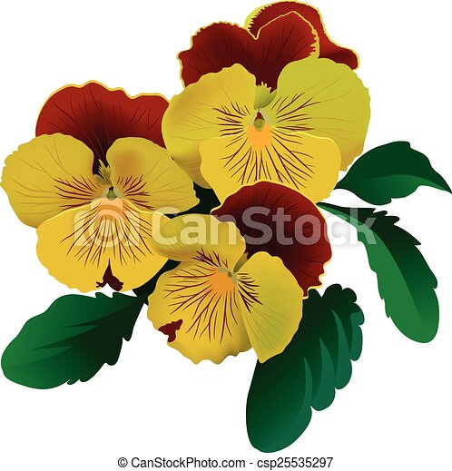 Three yellow pansy flowers with leaves three yellow pansy flowers with leaves csp25535297 mightylinksfo