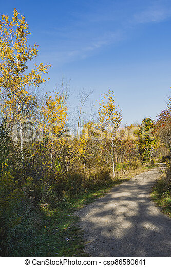 Three young birches in a city park - csp86580641