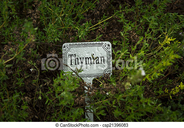 thyme with label - csp21396083