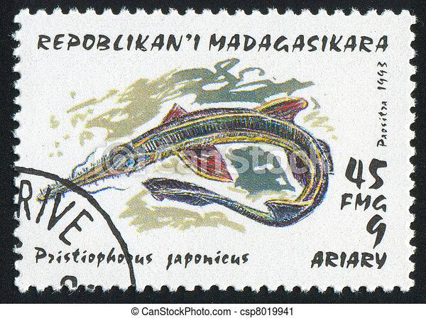 Shark - csp8019941