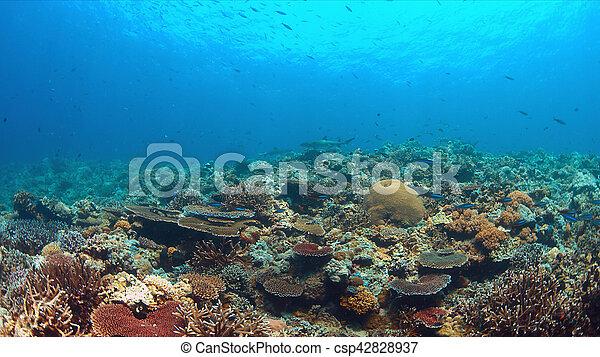 Tiburones de arrecife de Whitetip en un arrecife de coral con muchos peces - csp42828937
