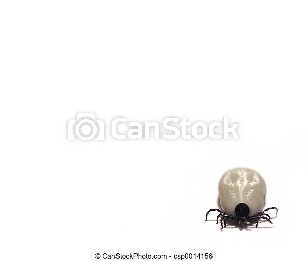 Tick inthe corner - csp0014156
