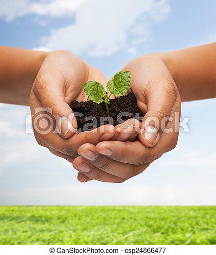 tierra, planta, valor en cartera de mujer, manos - csp24866477