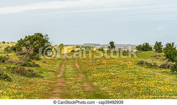 Flores silvestres de la costa oeste - csp39492939